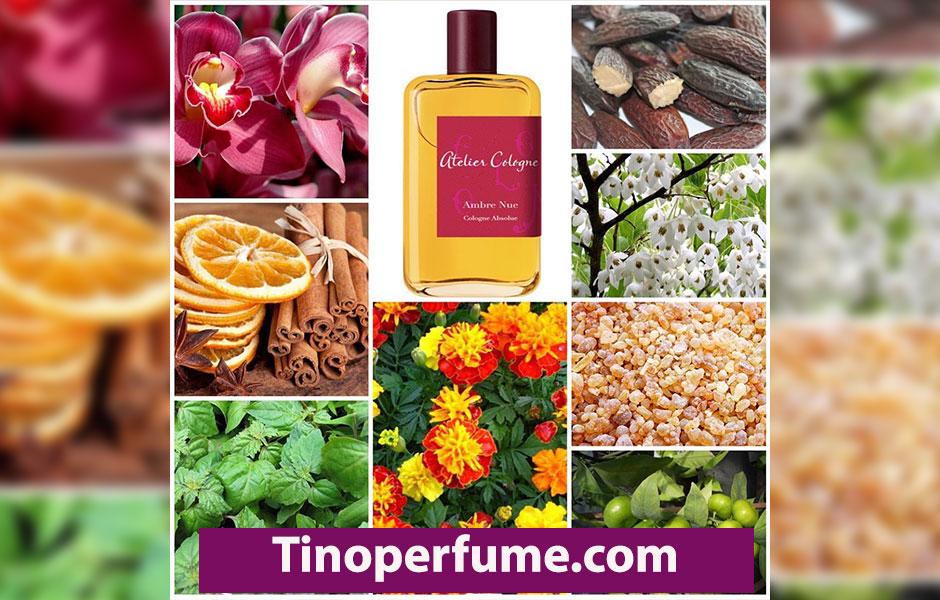 نت هایی که در ابتدای هرم بویایی ادکلن آتلیه کلون امبر نو Atelier cologne Ambre Nue استفاده شده است، نت هایی نظیر ترنج، پرتقال ماندارین و گل همیشه بهار است