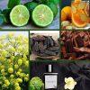 ، استفاده از عطر نویر گاباردین بیشتر در بهار و تابستان پیشنهاد می گردد.
