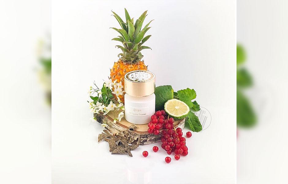 تیزیانا ترنزی اوریون در گروه بویایی چوبی مشک گلی قرار گرفته است به طوریکه دقیقا ترکیباتی از چوب، مشک و گل دارد.